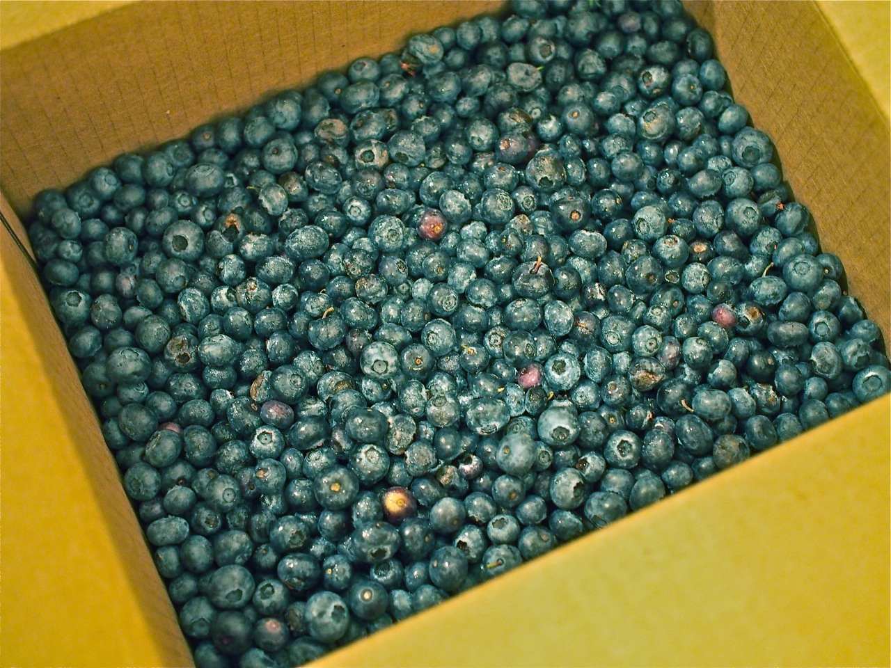 10lb of blueberries